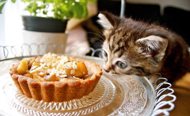Foto gatti e dolci