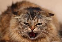 Foto iperestesia gatto